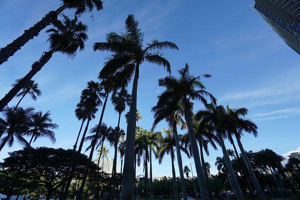 訪問2回目で分かった! ハワイ旅行を低価格で ゴージャスに楽しむ方法